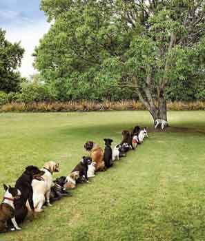 dog-queue-for-pee
